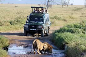 Game drives in Akagera Park