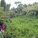 Five tips for Mountain Gorilla Trekking